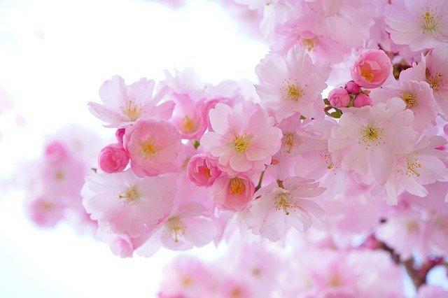 Les meilleures fleurs pour les personnes allergiques
