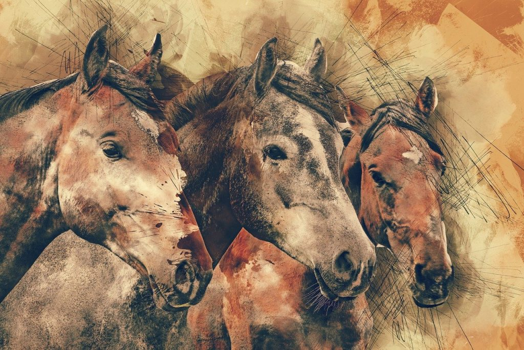 les chevaux, tête de cheval, animaux