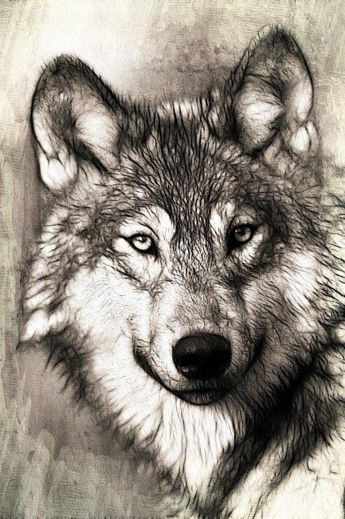 loup, portrait, diriger