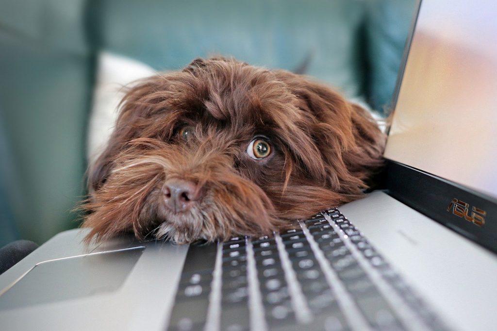 chien, confinement, télétravail